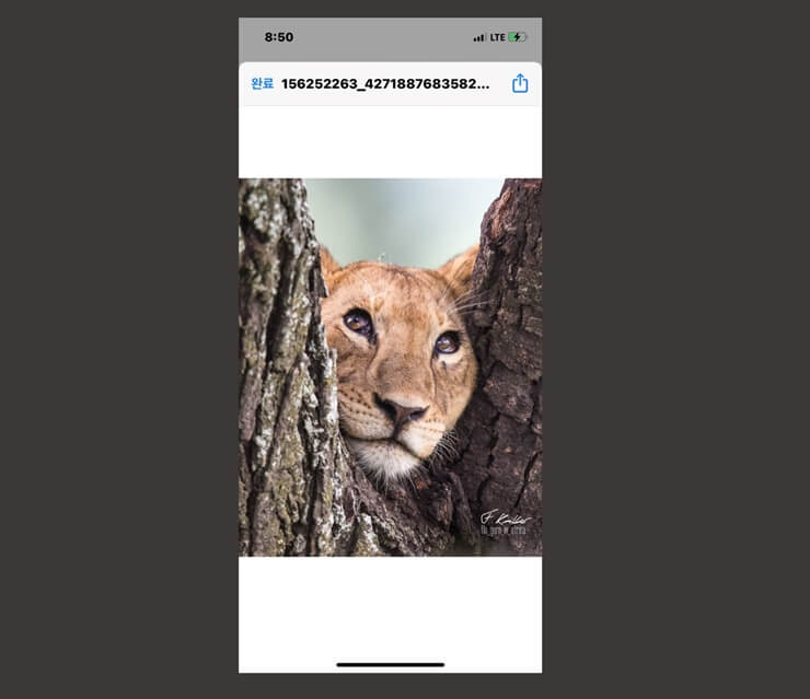 How to download Instagram photos 8